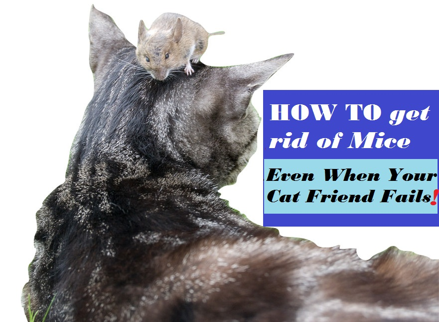 ordinary Getting Rid Of Mice In Kitchen #9: How To Get Rid of Mice and Other Kitchen Pests