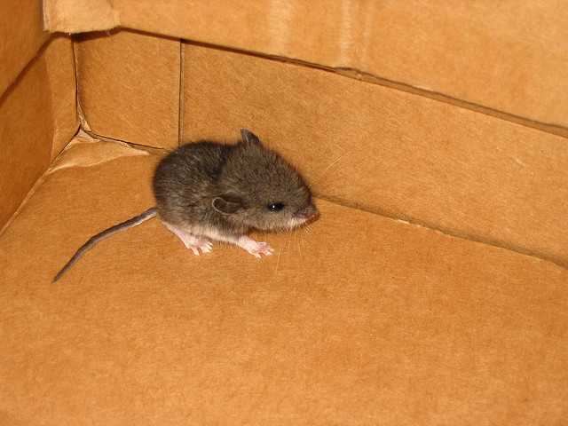 charming Getting Rid Of Mice In Kitchen #8: pest control